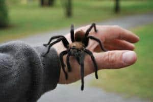 Vi niste rođeni sa fobijom od paukova,ovo vazi i za većinu drugih fobija. Ova fobija je stečena i kao takva može se odstraniti uz pomoć hipnoze.